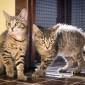 Rekonstrukce útulku pro psy a kočky 3