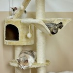 05 Kočičí herna pro vykastrované či mladé a vzájemně se snášející kočičky