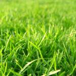 15815-grass-material